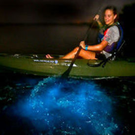 Bioluminescent Kayak Tours